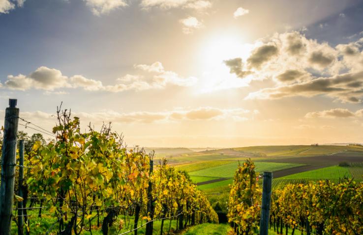 Haal Frankrijk in huis met deze wijnen